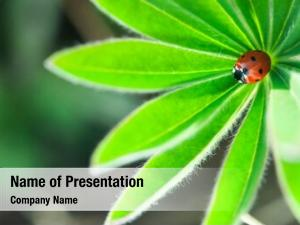 Leaf, ladybug green ladybird cre