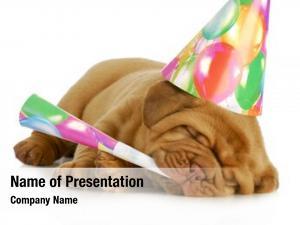 Dogue birthday pupp bordeaux puppy