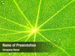 Plant green natural leaf dew