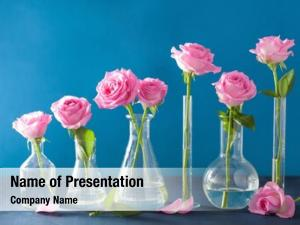 Flowers pink rose chemical flasks