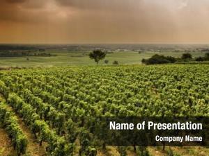 Vineyard worldwide famous burgundy