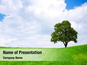 Banner summer ecology