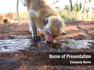 Squirrel water drinking monkey
