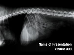 X ray canine spine