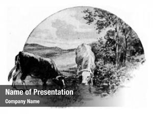 Grass cow eats clover meadow,