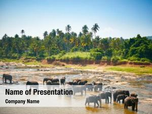 Elephants sri lankan river