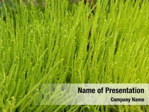 Green closeup texture succulent plant,
