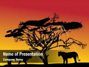 Sunset savanna lions