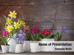 Flower spring flower pot