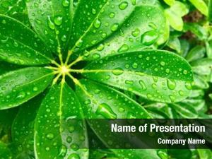 Green close raindrops leaves