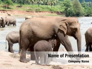 Feeds female elephant baby