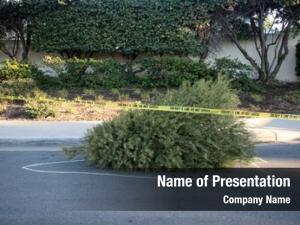 Tree dead christmas