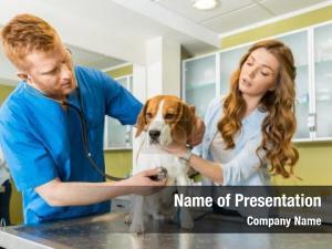 PPT - MEDIC VETERINAR CHIAJNA PowerPoint Presentation, free download - ID