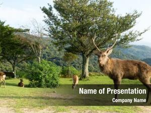 Buck deer with roe