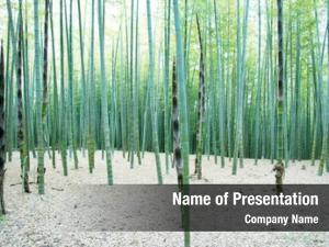 Forest, young bamboo some new