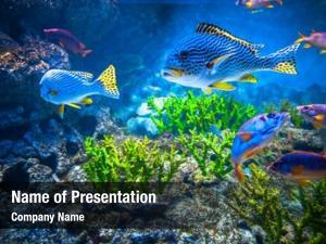 Showing colorful aquarium, different colorful
