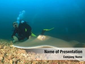 Diver stingray scuba