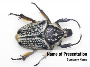 Bug, beetle, brown, close up,