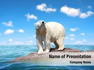 Stand polar bear rock middle