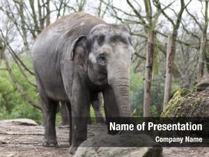 Zoo indian elephant aviary