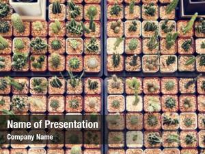 Nature cactus display plants