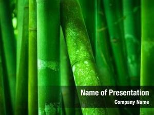 Bamboo close green grove
