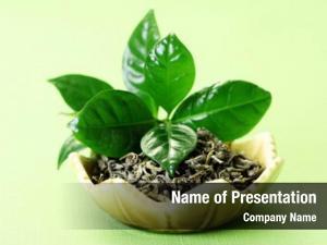 Tea bowl green herbal medicine