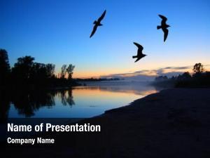 Landscape river dusk gulls after