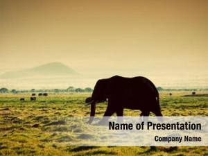 Savanna elephant african sunset