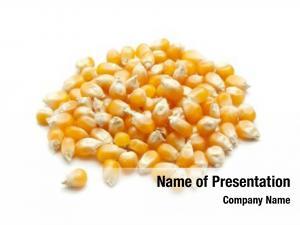 Grain heap corn white