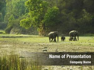 Wild elephant going forest