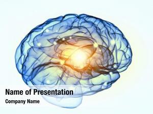 Brain science human white