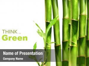 White bamboo shoots