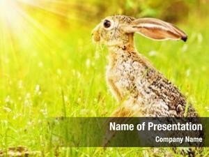 Hare, wild african sitting flower