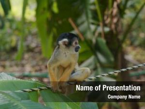 Zoo squirrel monkey park