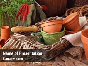 Life gardening still flower pots,
