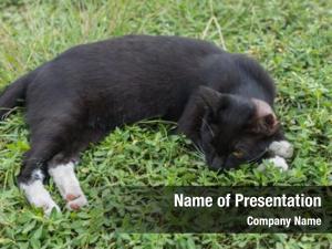 Lying black cat grass outdoor