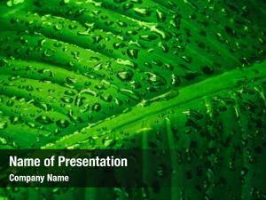 Dew green leaf drops close up