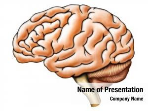 Anatomy, human brain side view
