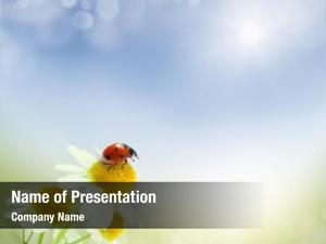 Bokeh daisies field korovkfon ladybug