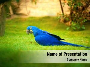 (blue colorful parrot parrot) grass