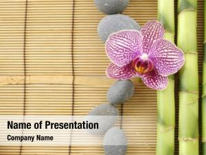 Orchid spa frame stones bamboo