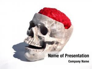 Brain human skull