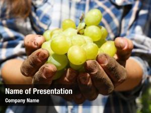 Hands of a grape