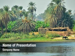 Rural nile riverside life, egypt