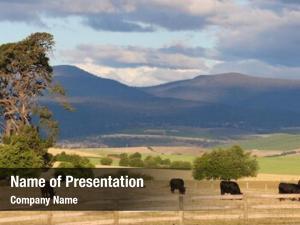 Grazing rural outlook cattle