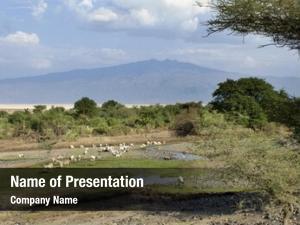 Wildlife, landscape african tanzania