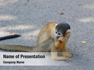 Park squirrel monkey