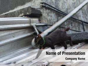 Walking black cat roof cat