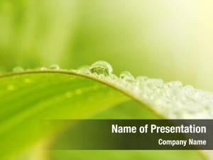 Raindrops green grass